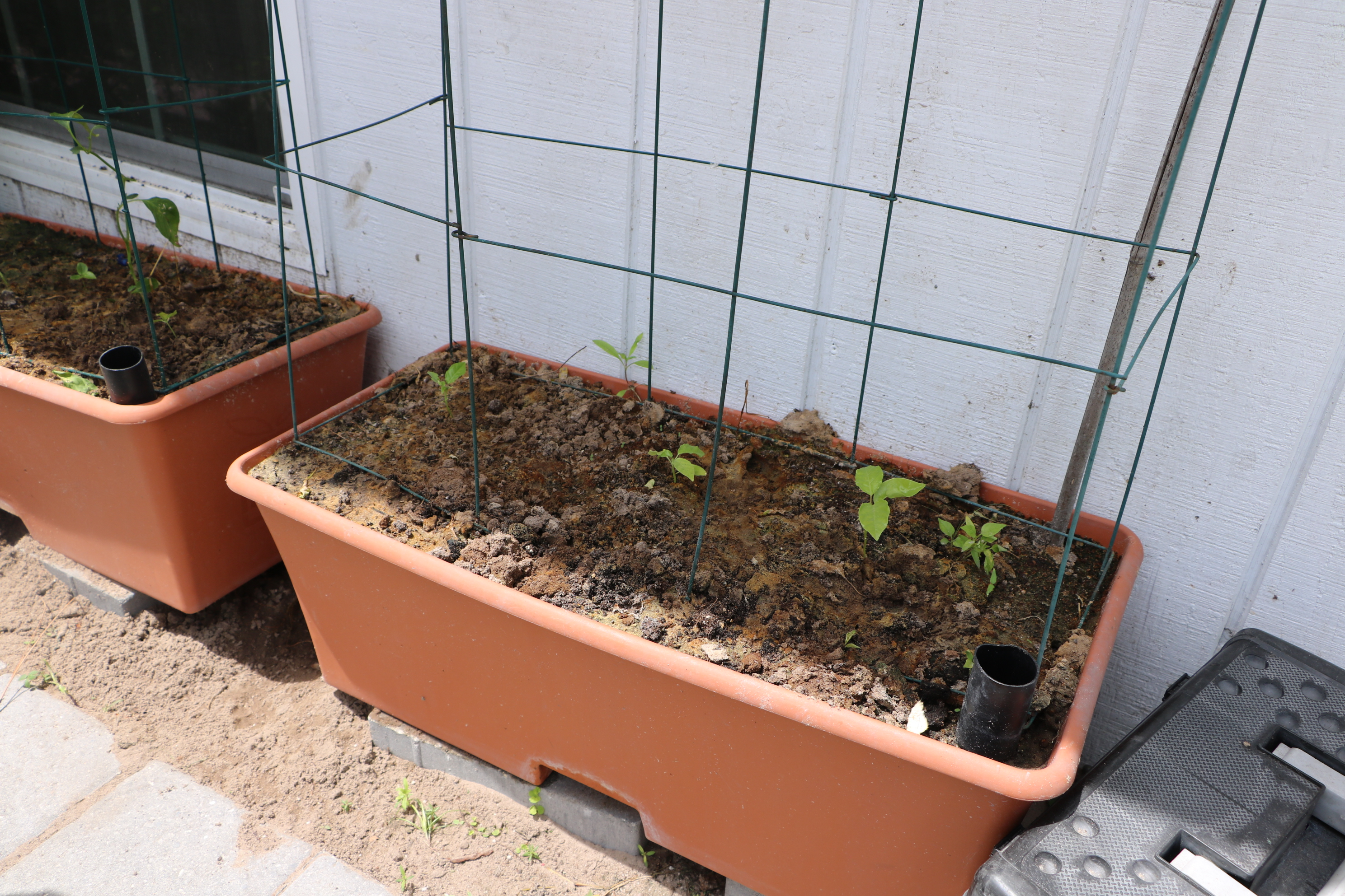Earth Boxes - Cultivate Immokalee